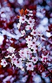 Wiosna ^^