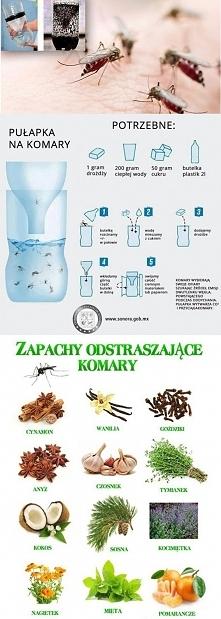 Już niedługo komary- oto pułapka na nie