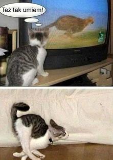 Koty śmieszne zdjęcia