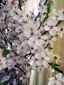 Trochę wiosny w domu, ahh pięknie pachną! ♥