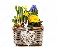 Kosz wiosennych kwiatów