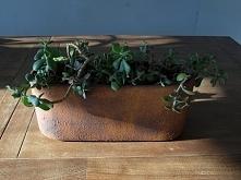 Donica Cactus pokryta rdzą-...