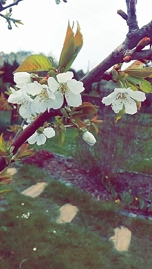 wiosna ...