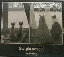test kotów