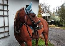 Moje kochanie w niebieskich nausznikach :)