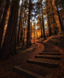 Muir Woods National Monument, USA