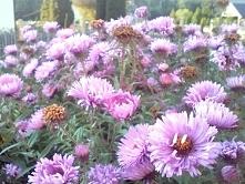 Kwiaty to piękna  rzecz