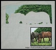 konie haft krzyżykowy