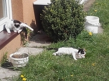 koty Leon i Luna