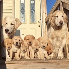 Cudowna rodzinka *.*