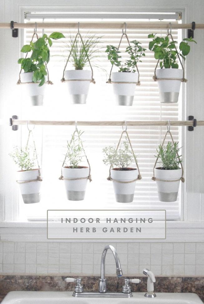 ogrod ziolowy w kuchni