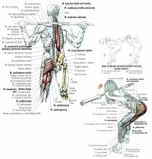 Jedno z moich wczorajszych ćwiczeń na tylną część nóg i pośladków, skłon w pr...