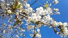 Wiosna, wiosna !!!