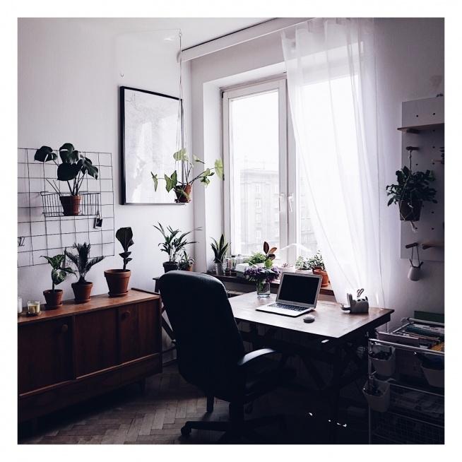 """Moje domowe """"urban jungle"""" instagram: @wild.rocks  #dom #wystrójwnętrz #rośliny #dom"""