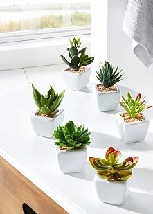Niewielkie dekoracyjne roślinki - coś dla tych, którzy zapominają o podlewaniu;)