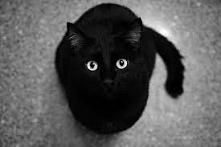 Słodki,czarny kot <3