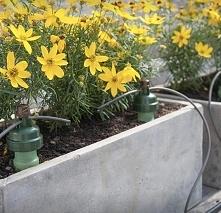 Kroplowniki Blumat zapewnią odpowiednie nawodnienie roślinom w ogrodzie, na t...