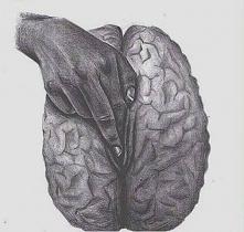 #brain.