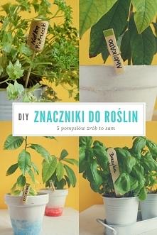 Znaczniki do roślin w ogródku czy na balkonie, tabliczki do ziół na parapecie...