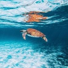 Żółwik sobie pływa... :)