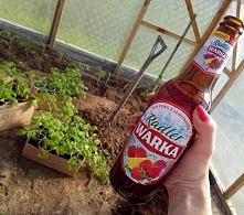 Pomidorki wsadzone jakiś cz...