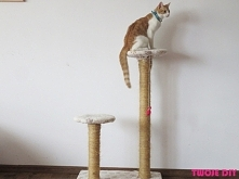 Jak zrobić drapak dla kota? - zobacz na twojediy.pl