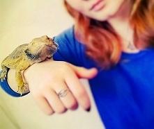 Mój cudowny, mały dinozaur! <3
