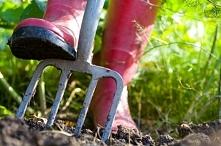 Czerwcowe prace w ogrodzie. Jakie powinniśmy wykonać, aby cieszyć się pięknym...