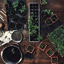25 czerwca obchodzimy noc kupały, pamiętajcie nazbierać zioła i zrobić wianki :D