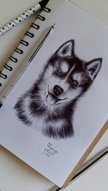 Husky :) Długopis w szkicowniku. FB/zuzarysowana