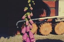 kwiatek.