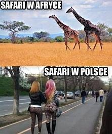 Safari w Afryce i w Polsce