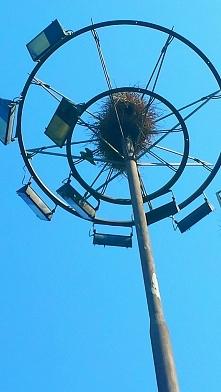 Barcelona- tu papugi robią gniazda gdzie popadnie. Rozejrzyjcie się wokół jes...