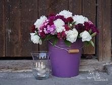 Kwiaty z naszego ogrodku