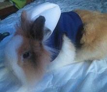 Własnoręczny projekt na ubranka dla króliczka.   Króliczek Ptyś pozdrawia :)