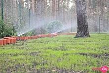 Jak zrobić nawadnianie ogrodu?