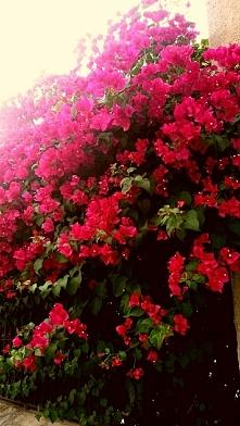 czerwień zmieniająca się w róż:)♡