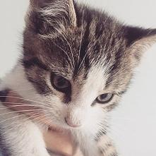 Ostatnio zostałam mamą, tej słodkiej kotki :3 niestety kotka nie ma jeszcze imienia :( Może ktoś z Was ma pomysł na imię dla tej ślicznotki? <3
