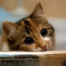 Ten koteł ewidentnie na coś poluje