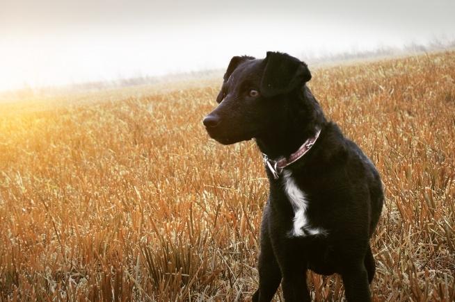 Mój psiak podczas jednej z podróży. Zoja ♥