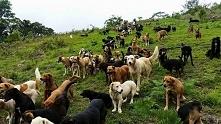 setki psów :D
