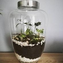 mój osobisty ogród w szkle :) własnoręcznie zrobiony :)