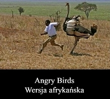 Angry Birds w Afryce
