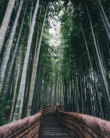 Ścieżka bambusowa w Japonii :)