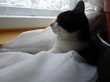 kot na wakacjach - post pisany z punktu widzenia kota - zabawna historia ;) (...