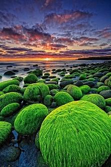 Zielone skały na plaży Hvan...