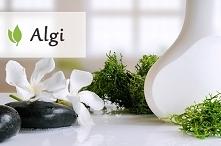 Algi - czym są i jakie właściwości wykazują?