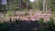 w miejscu ostoi bobrów
