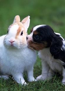 Zwierzęca miłość <3