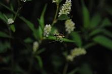 Little spider.......  Zapraszam po więcej zdjęć na mojego instagrama : __ols__